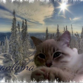 Nevanlinna Siberian Cattery House