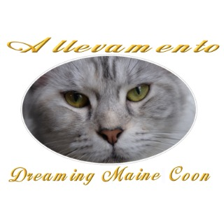 Dreaming Maine Coon