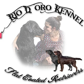 Rio d'oro allevamento Flat Coated Retriever