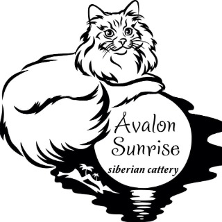 Avalon Sunrise Siberian Cattery