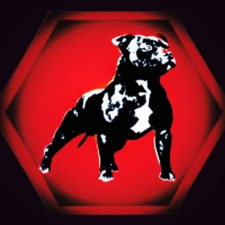Staffy Black Bull Kennel