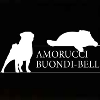 Buondi-bell Cattery  and kennel Amorucci