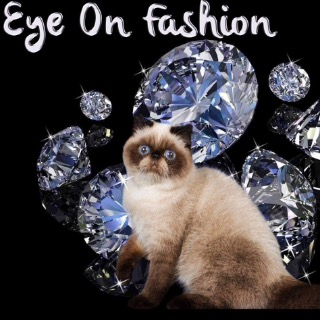 Eye On Fashion Cattery