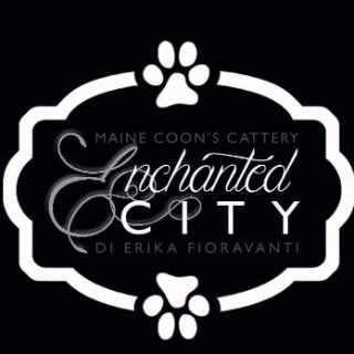 enchanted City allevamento Maine coon