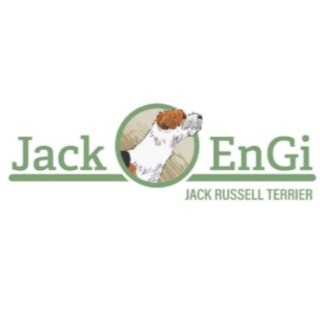 Jack EnGi Allevamento Amatoriale Jack Russell Terr
