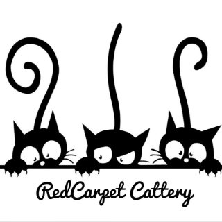 Red Carpet Cattery