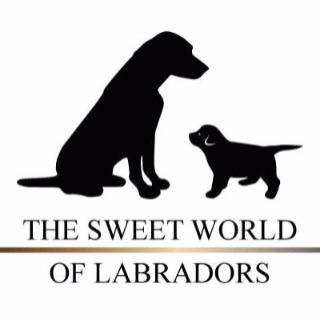 The Sweet World Of Labradors