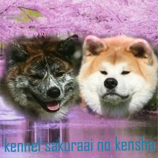 Sakuraai no kensha kennel