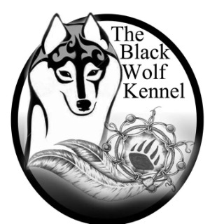 Allevamento siberian husky the Black wolf