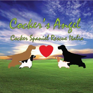 COCKER'S ANGEL COCKER SPANIEL RESCUE ITALIA