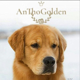 AnThoGolden