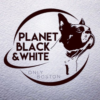 Allevamento Boston terrier