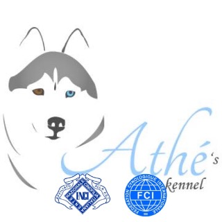 Athe's kennel Siberians