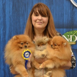 Queen of pomeranians