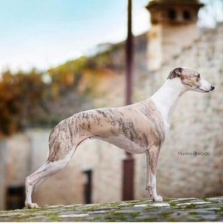Alessandra Le Roy Kennel