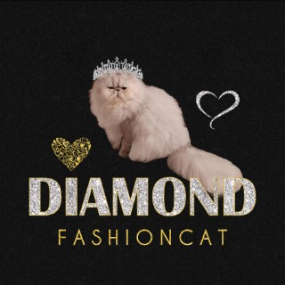 Diamond Fashion Cat