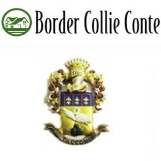 Border Collie Conte