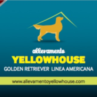 ALLEVAMENTO YELLOWHOUSE